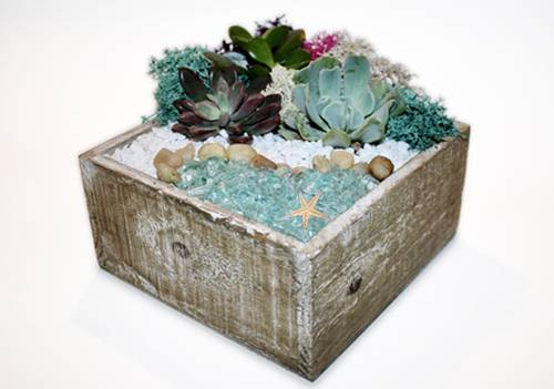 A Tranquility Sea Terrarium plant nite project by Yaymaker
