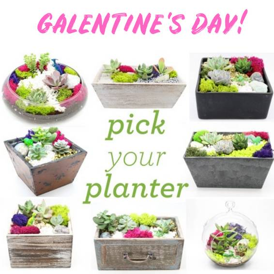 A Galentines Day Special Event  Your Choice of Planter plant nite project by Yaymaker