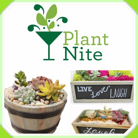 A Succulents in Barrel or Chalkboard Planter plant nite project by Yaymaker