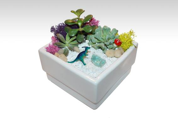 A Dino Garden  White Ceramic Square Dish plant nite project by Yaymaker