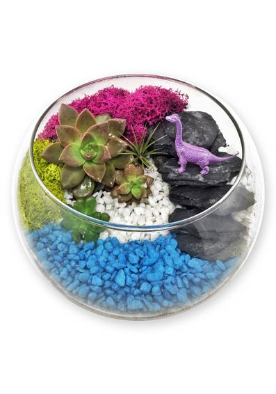 A Dinosaur Cove Terrarium plant nite project by Yaymaker