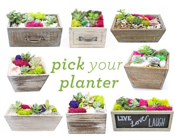 A Pick Your Planter Succulents with Choice of Wood Planter plant nite project by Yaymaker
