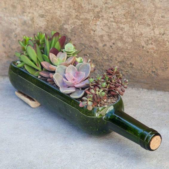 A Wine Bottle Succulent Planter plant nite project by Yaymaker