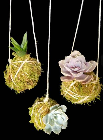 A Moss and Twine Hanging Succulents plant nite project by Yaymaker