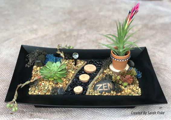 A Zen with Air Plant plant nite project by Yaymaker