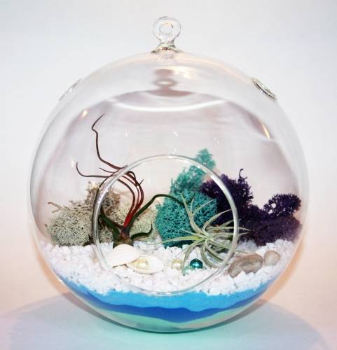 A Ocean Breeze Globe  Air Plant Sand Art plant nite project by Yaymaker