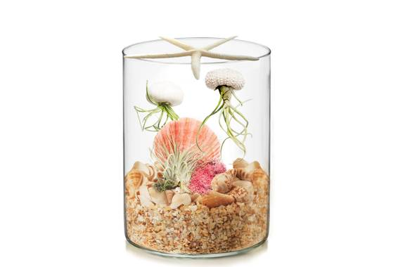 A Jellyfish Under the Sea Terrarium plant nite project by Yaymaker