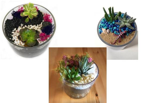 A Succulent Garden in Glass Cylinder  Your Design Choice plant nite project by Yaymaker