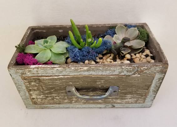 A Wooden Drawer with Succulents plant nite project by Yaymaker