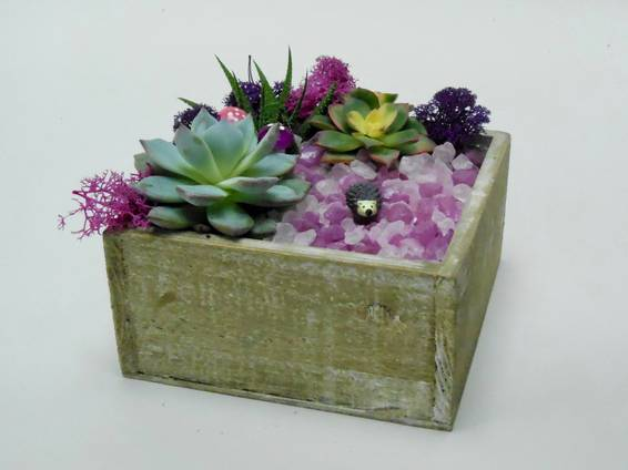 A Hedgehog Beauty  Natural Wood Square Box plant nite project by Yaymaker