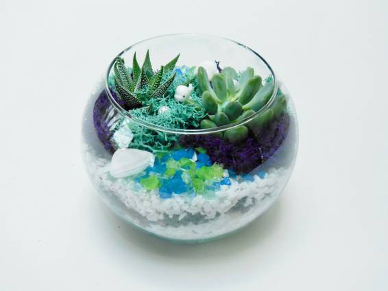 A Sea Whale  Succulent Rose Bowl plant nite project by Yaymaker