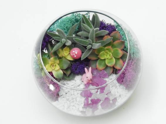 A Sweet Bunny  Succulent Rose Bowl plant nite project by Yaymaker