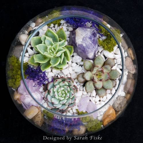 A Amethyst in Rose Bowl plant nite project by Yaymaker
