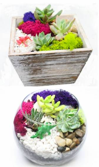 A Succulent Garden in Glass or Rustic Wood Container plant nite project by Yaymaker