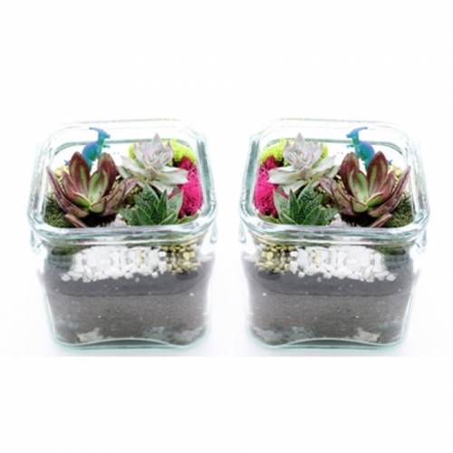 A Succulents in Two Glass Cube Containers plant nite project by Yaymaker