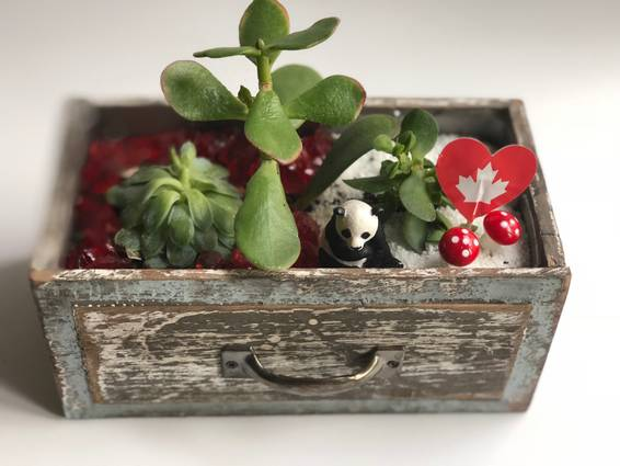 A Oh Canada Panda in Wood Shelf plant nite project by Yaymaker