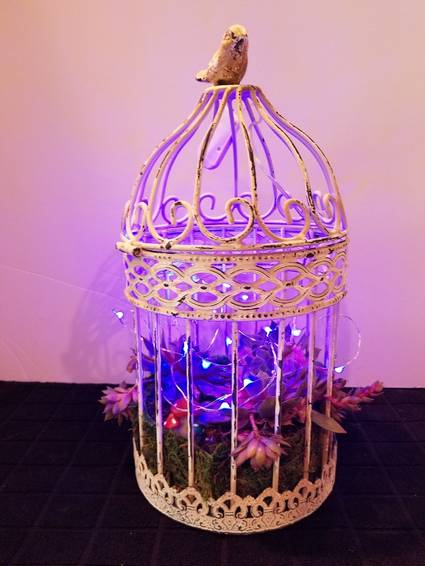 A BirdCage with Succulents and Fairy Lights plant nite project by Yaymaker