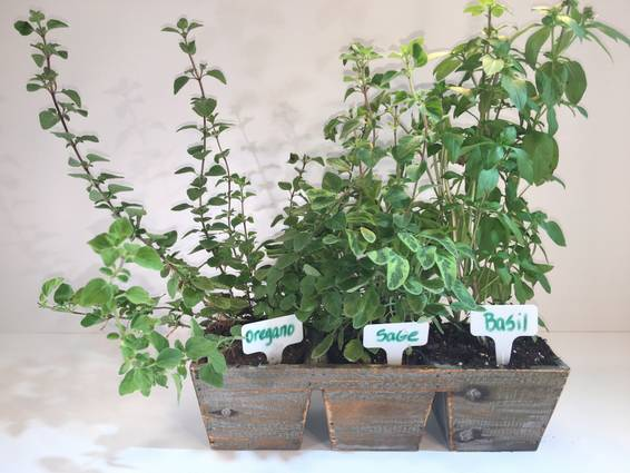A Extra Large Herb Garden plant nite project by Yaymaker