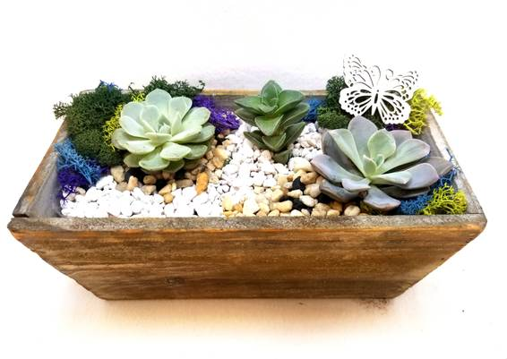 A Bright Bloom Succulents with Wooden Accent plant nite project by Yaymaker