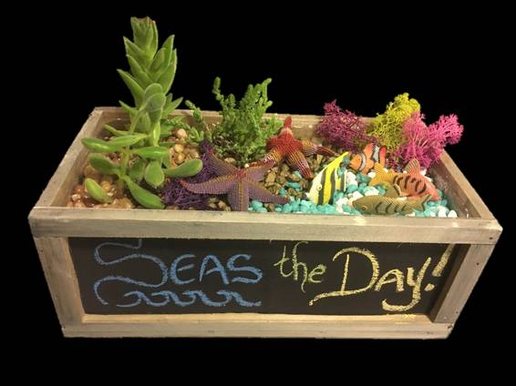 A Seas the Day Chalkboard Planter with Succulents plant nite project by Yaymaker
