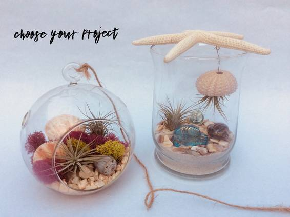 A Air Plant Beach Scene in Glass plant nite project by Yaymaker