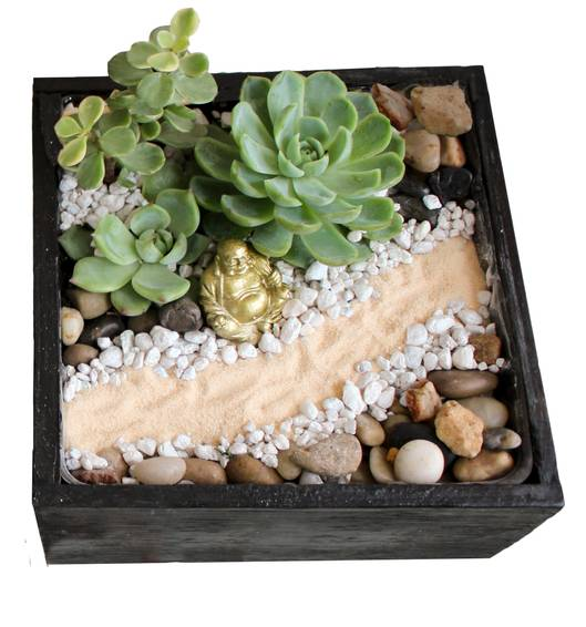 A The Path to Buddha Zen Garden plant nite project by Yaymaker