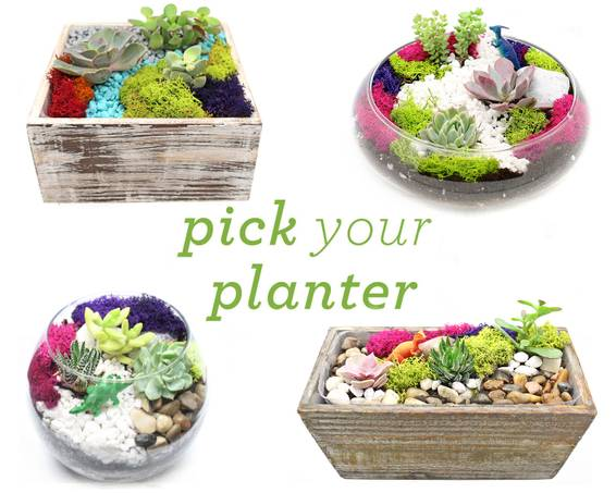 A Succulent Terrarium in Glass or Wood Container Pick Your Planter plant nite project by Yaymaker