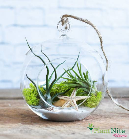 A Hanging Crystal Orb Terrarium plant nite project by Yaymaker