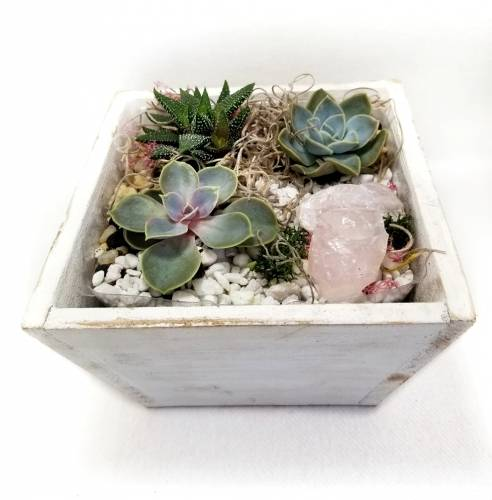 A Rose Quartz and Succulents in Wooden Planter plant nite project by Yaymaker