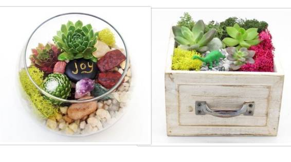 A Succulent Garden in Mini Drawer or Glass Bowl plant nite project by Yaymaker