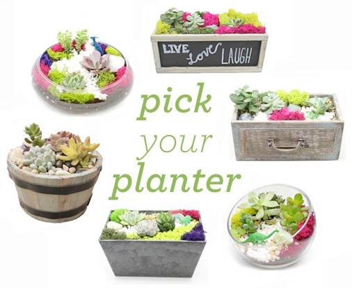 A Pick Your Planter Premium Succulent Terrarium plant nite project by Yaymaker