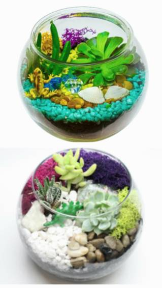 A Choice of Dino or Tropical Frog Rose Bowl plant nite project by Yaymaker
