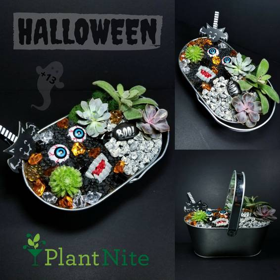 A Haunted Halloween Terrarium with 4 Succulents plant nite project by Yaymaker