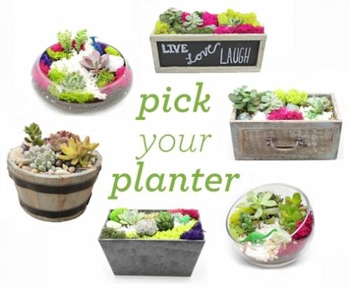 A Pick Your Own Planter with Premium Succulents plant nite project by Yaymaker