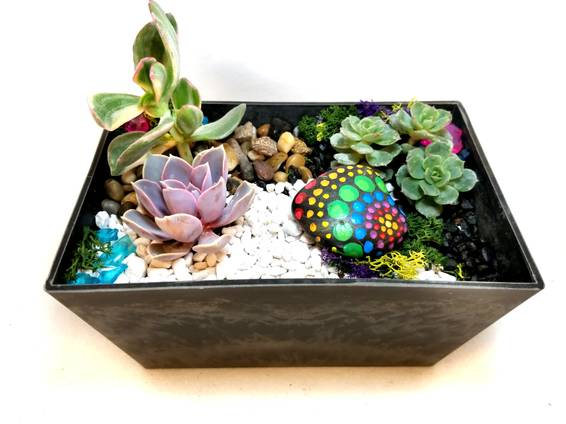A Color Pop Painted Rocks and Succulents plant nite project by Yaymaker