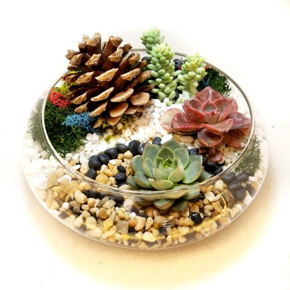A Giant Pine Cone and Succulents in Glass plant nite project by Yaymaker