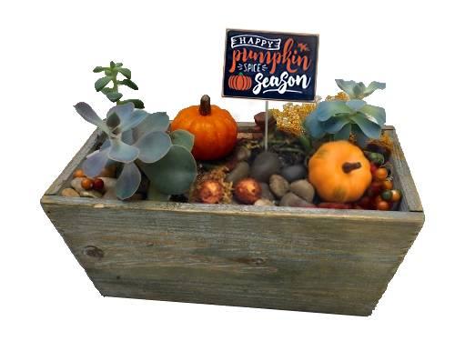 A Pumpkin Spice Season plant nite project by Yaymaker