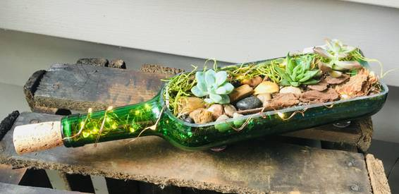 A Fairy Light Succulent Terrarium in Wine Bottle Planter plant nite project by Yaymaker