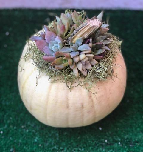 A Pumpkin Terrarium plant nite project by Yaymaker