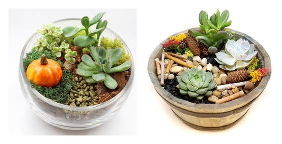 A Fall Succulents in Barrel or Slope Bowl plant nite project by Yaymaker