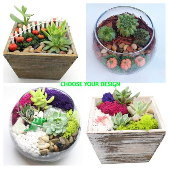 A Box or Bowl Fall or Not plant nite project by Yaymaker