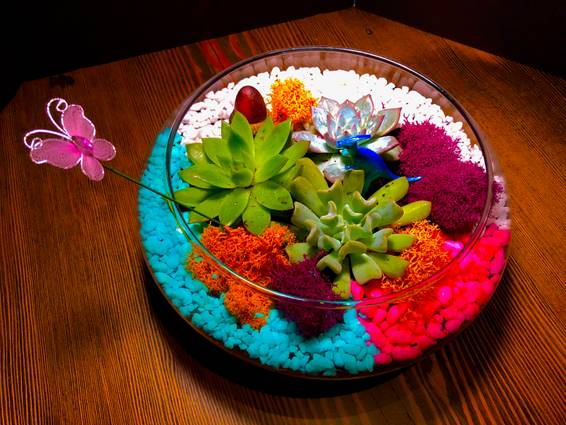A Succulent Terrarium in Glass Lily Bowl plant nite project by Yaymaker