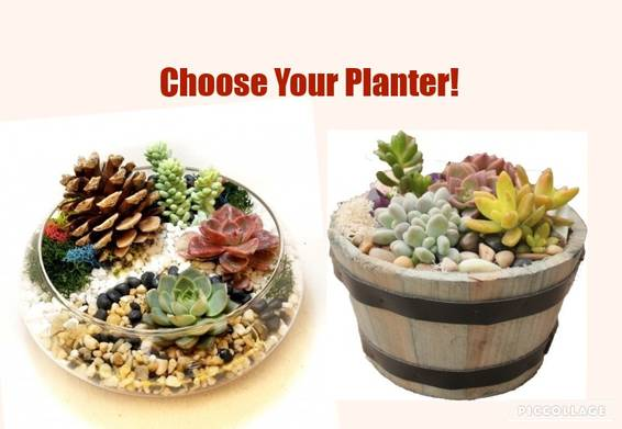 A Choose Your Planter Lily Bowl or Whiskey Barrel plant nite project by Yaymaker