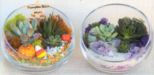 A Choose your Design Fall or Amethyst Terrarium in Rose Bowl plant nite project by Yaymaker