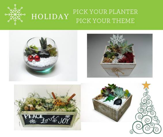 A Holiday Pick Your Planter plant nite project by Yaymaker