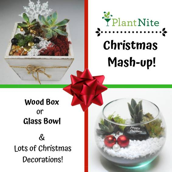 A Christmas Mashup plant nite project by Yaymaker