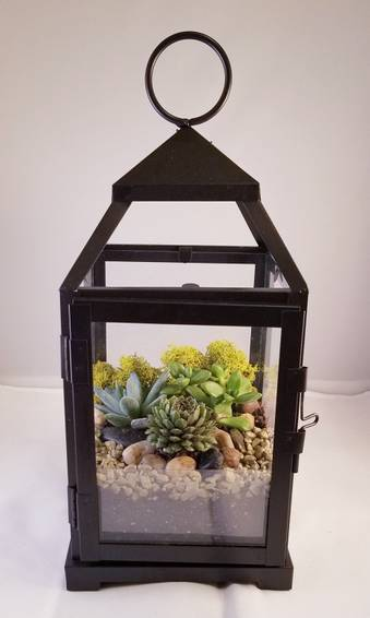 A Succulents in lantern plant nite project by Yaymaker