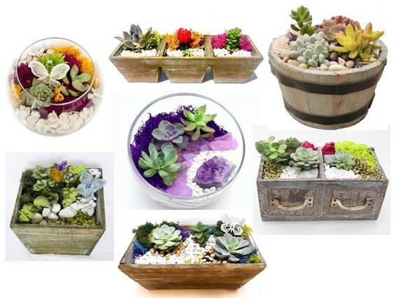 A Everyday Colorful Succulent Garden  Container Choice plant nite project by Yaymaker