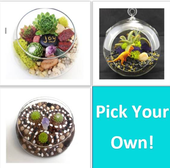 A Pick Your Own Glass  2019 plant nite project by Yaymaker