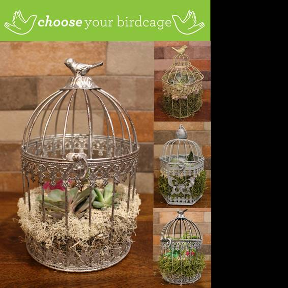 A Choose Your Vintage Birdcage plant nite project by Yaymaker
